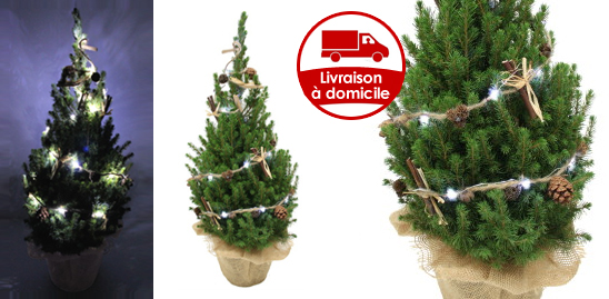 sapin de no l d cor sapin noel sapins nordmann picea nobilis. Black Bedroom Furniture Sets. Home Design Ideas